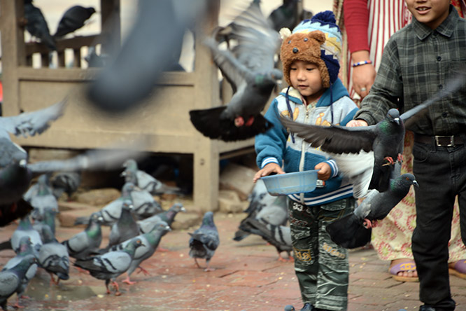 Nepal Durbar Pigeon Boy