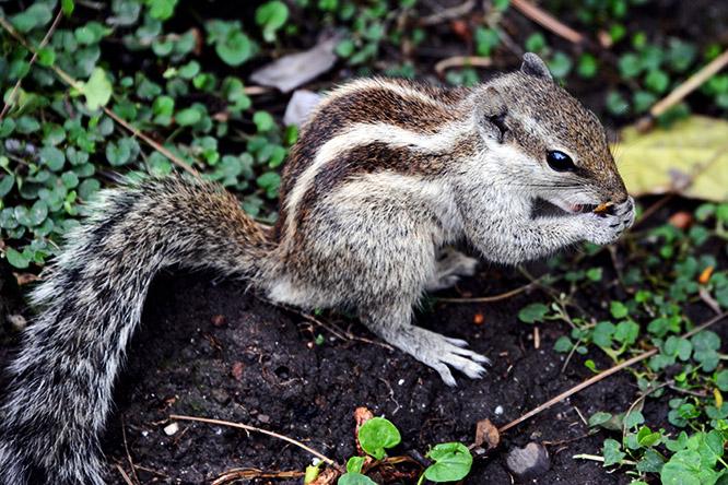 Nepal Kathmandu Garden Dreams Palace Squirrel