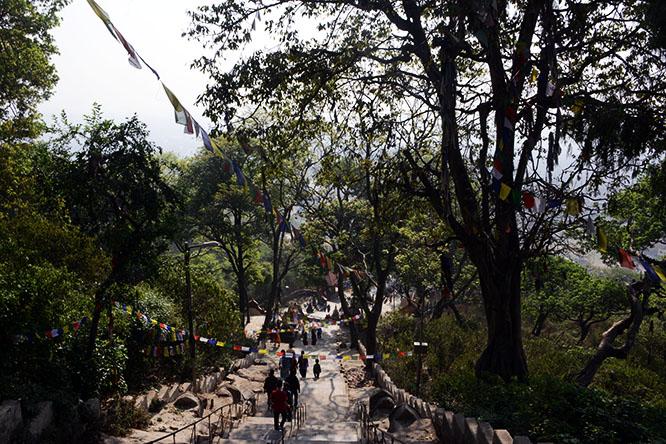 Nepal Kathmandu Monkey Temple Stairs