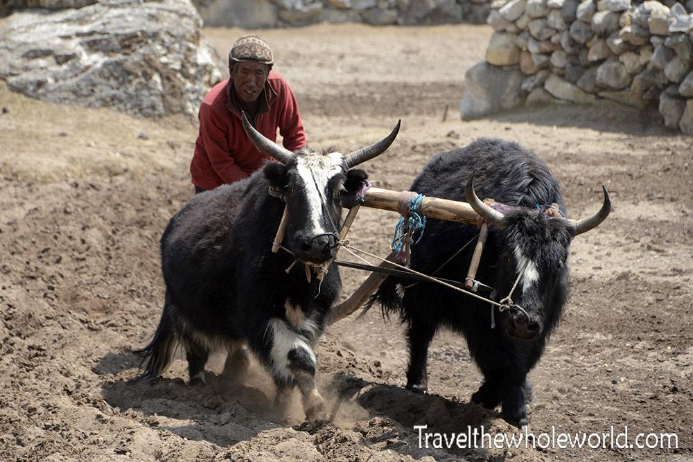 Nepal Khumbu Valley Dingbouche Farm