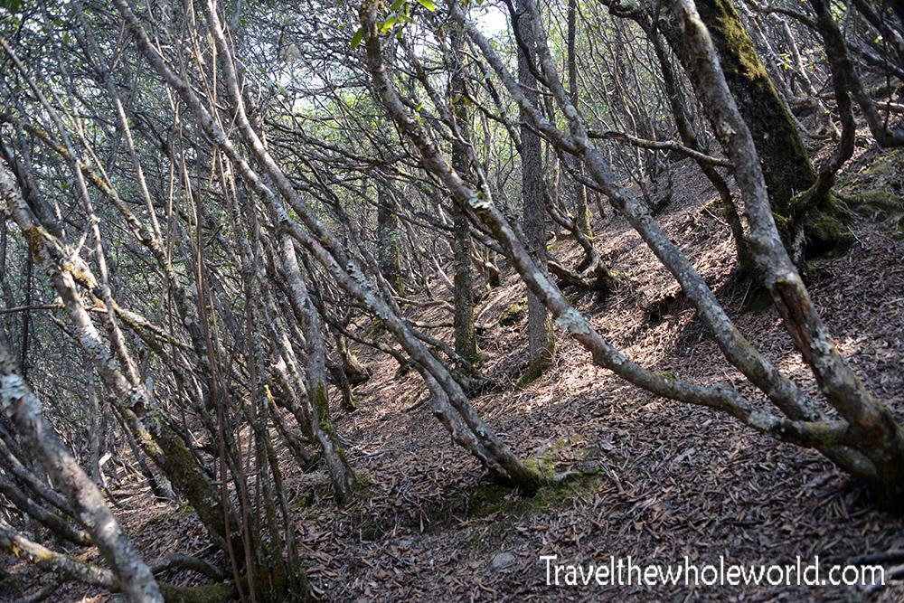 Nepal Khumbu Valley Tengboche Forest