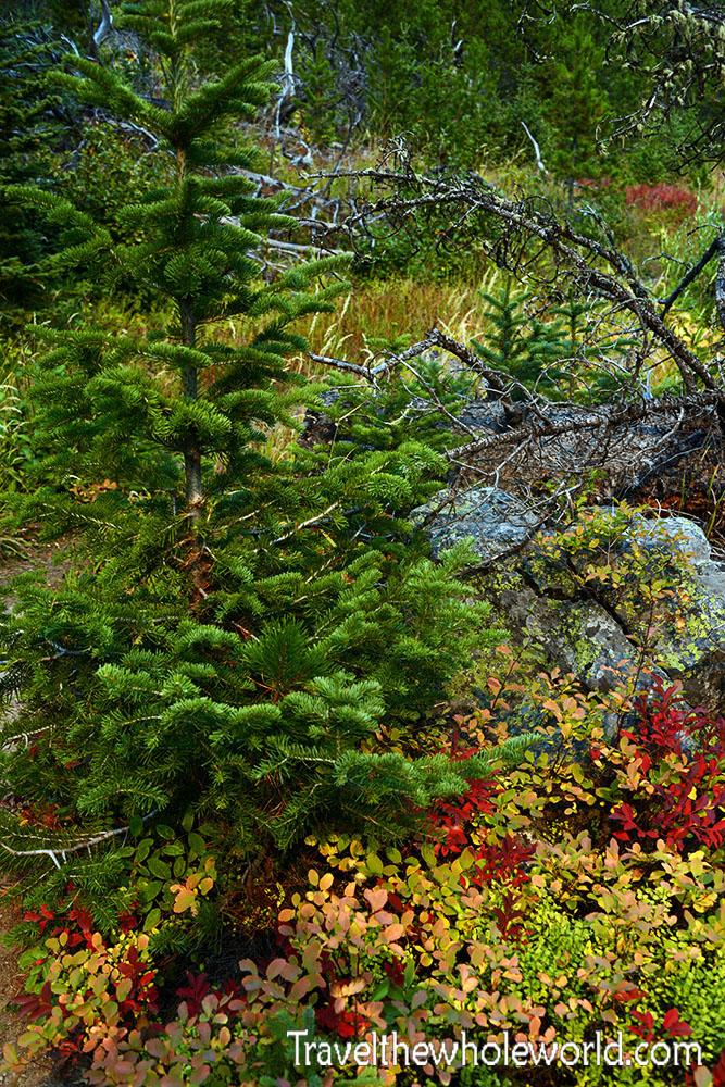 Montana Beartooth Wilderness Fall Colors