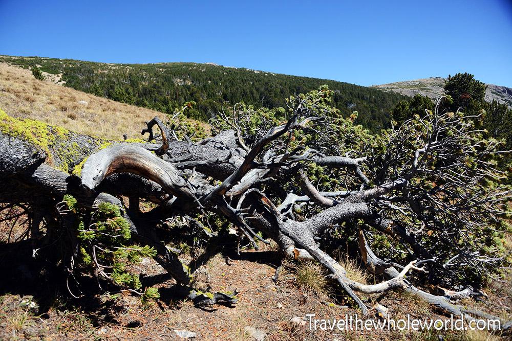 Montana Beartooth Wilderness Fallen Tree