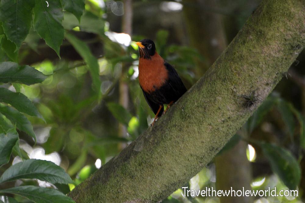 El Salvador Cerro Verde Bird