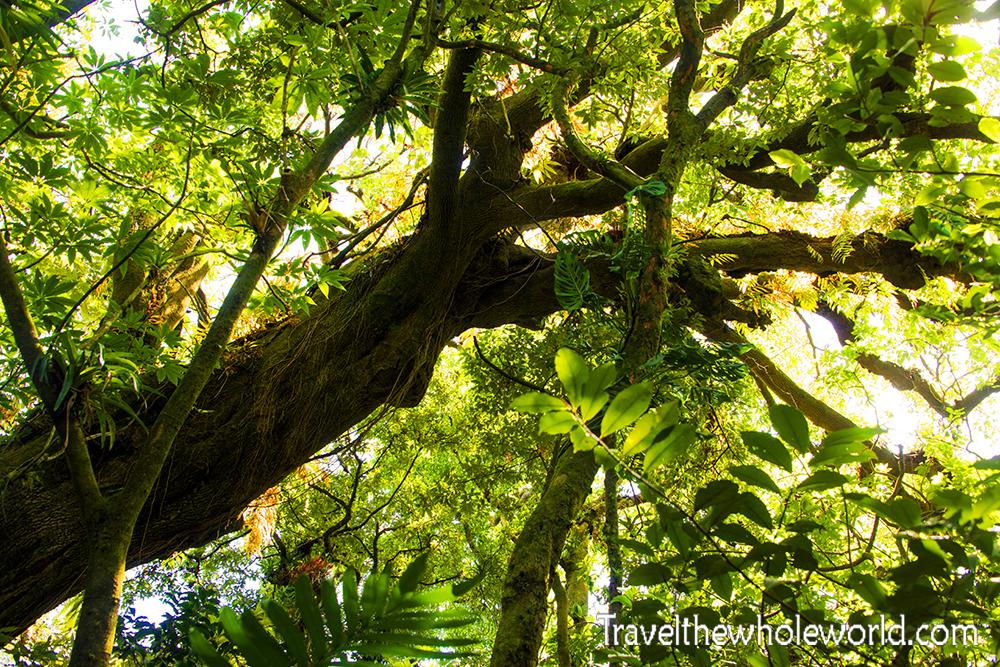 El Salvador Cerro Verde Forest