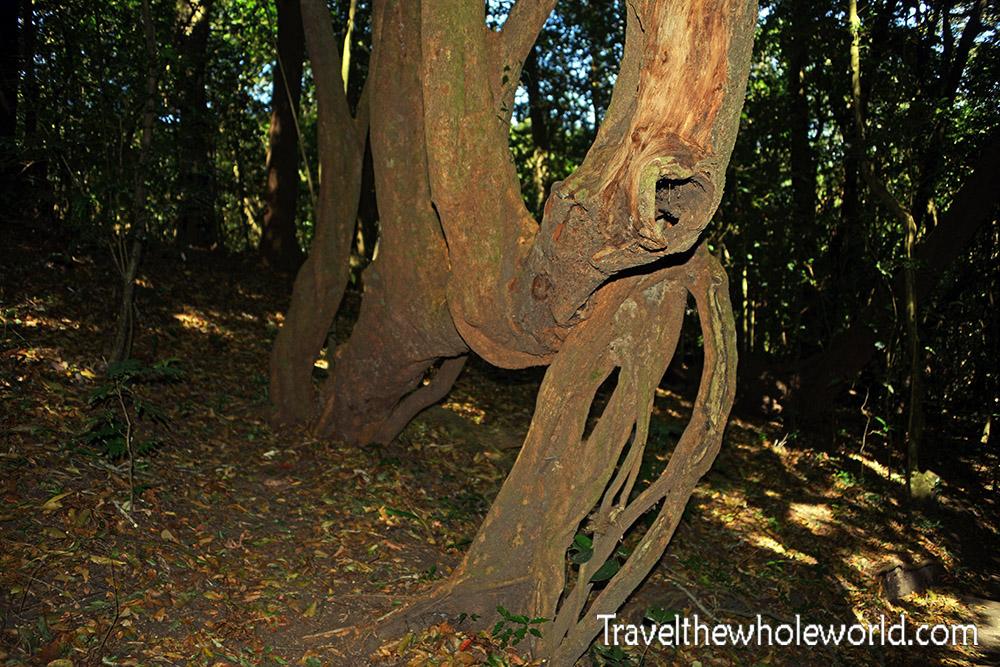El Salvador Cerro Verde Tree Mano Del Leon