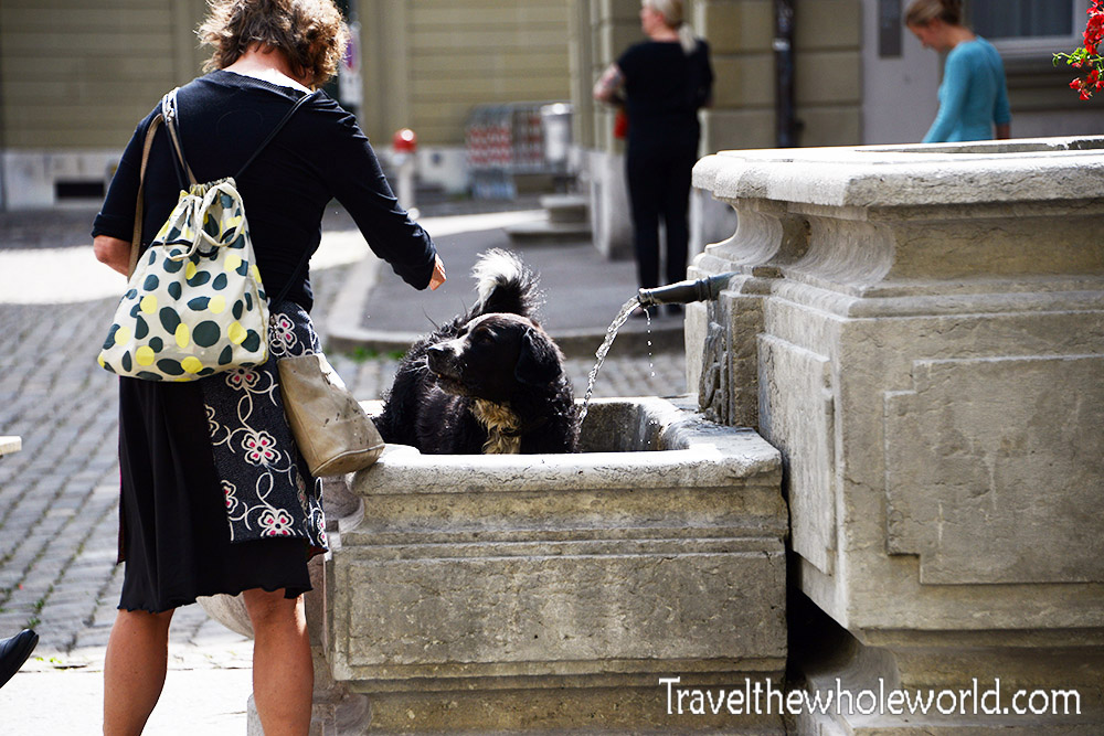 Switzerland Bern Fountain Dog