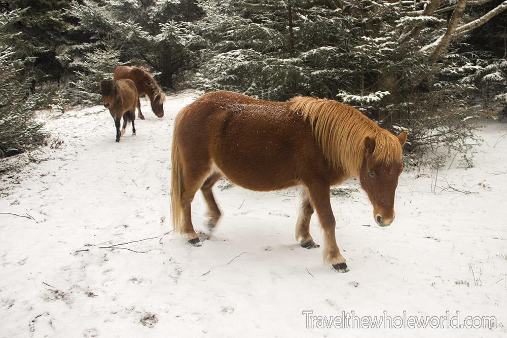 Virginia Wild Ponies Winter