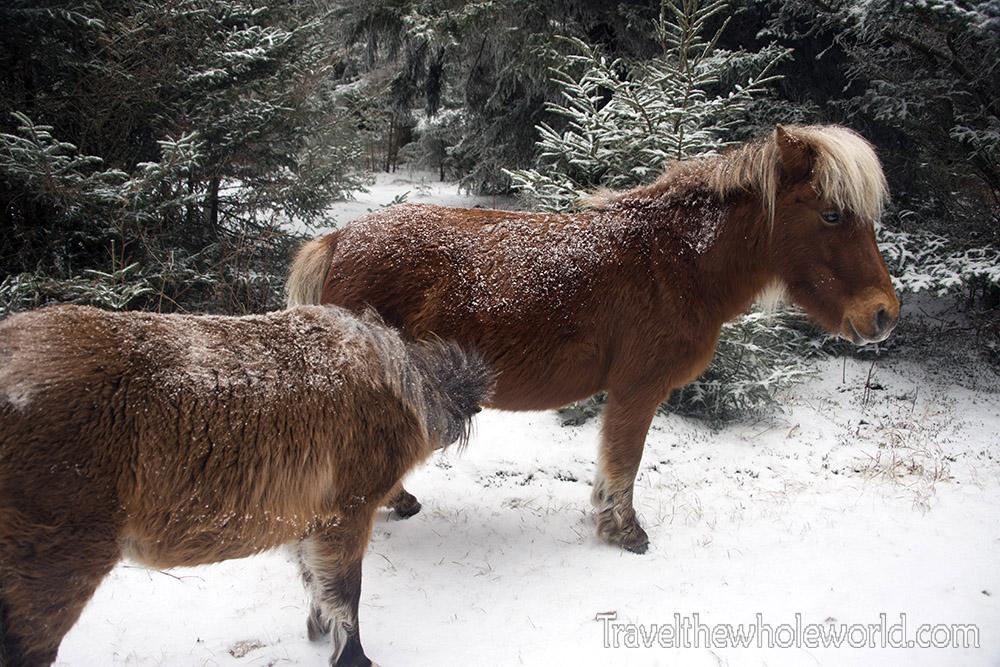 Wild Pony Foal Milk
