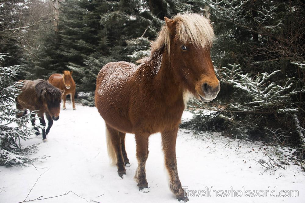 Mt. Rogers Wild Ponies