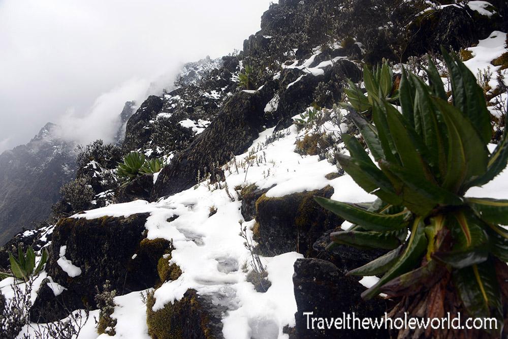 Uganda Rwenzori Snow