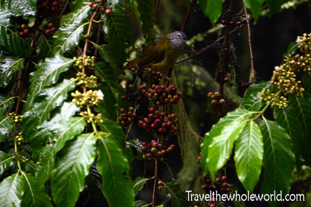 Uganda Rwenzori Wet Bird