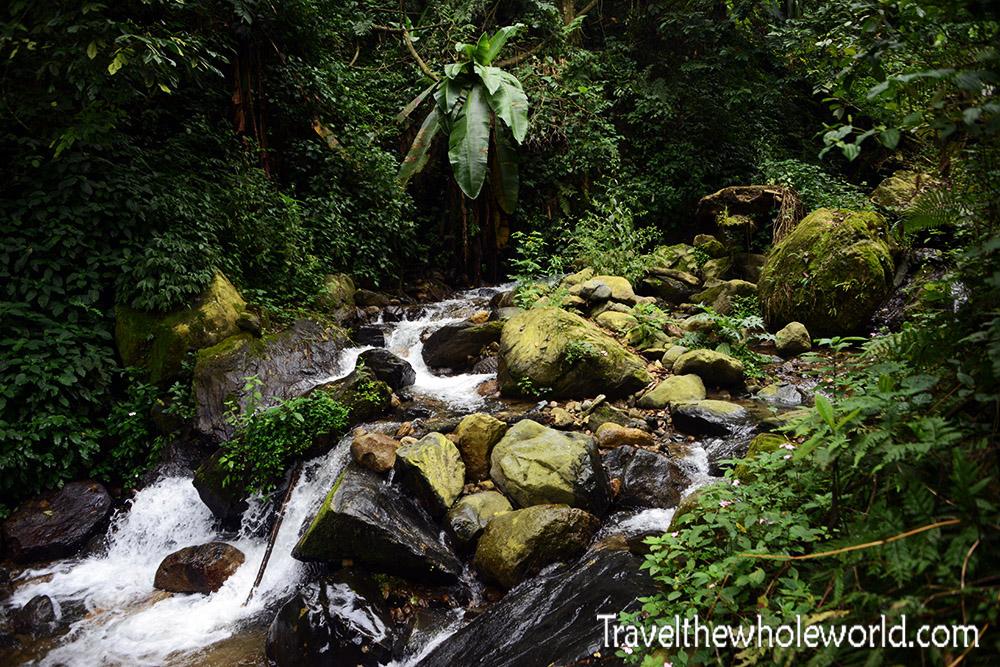 Uganda Rwenzori Creek