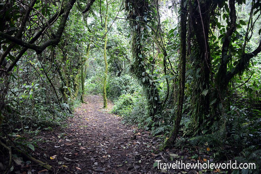 Uganda Rwenzori Rainforest Trai