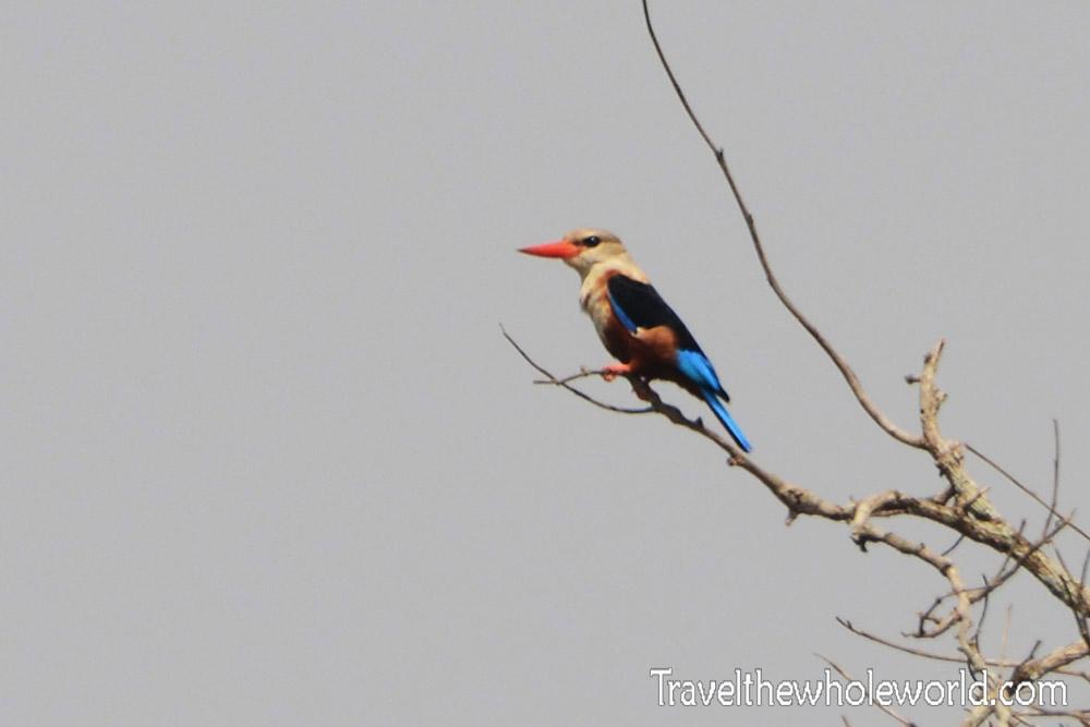 Ziwa Kingfisher