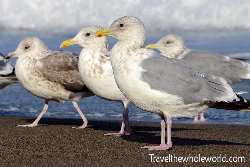 South Korea Seagulls