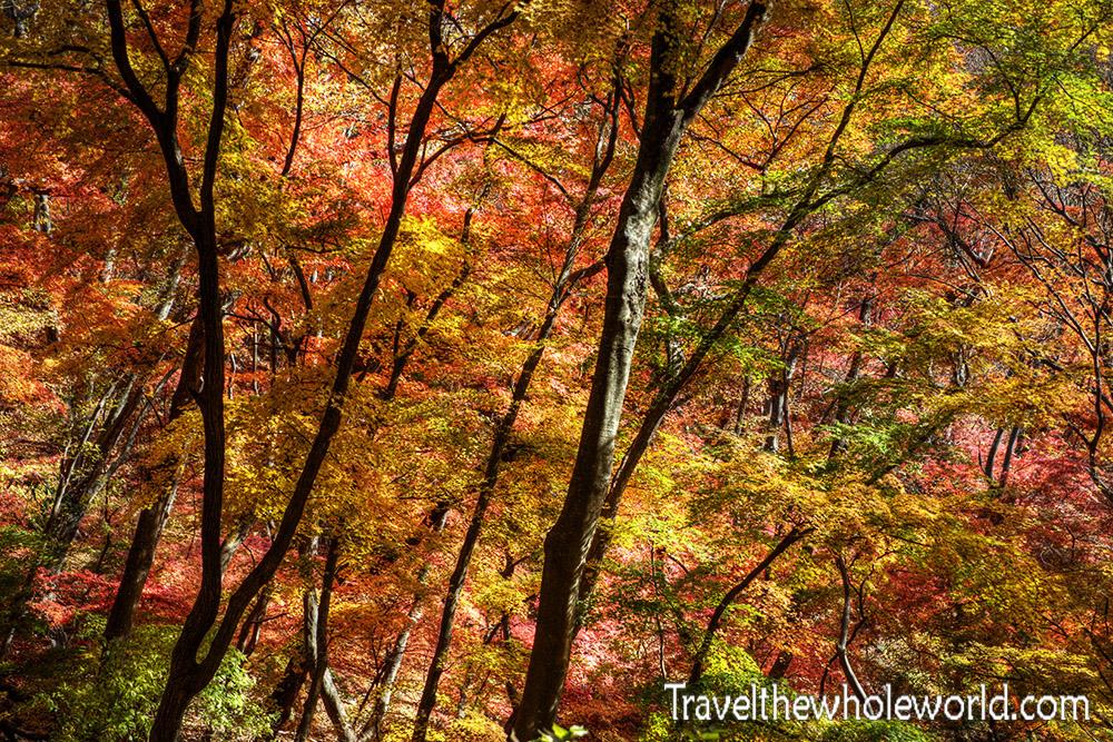 Naejangsan Fall Colors