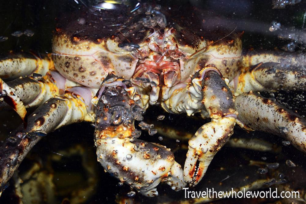 Korean Crab