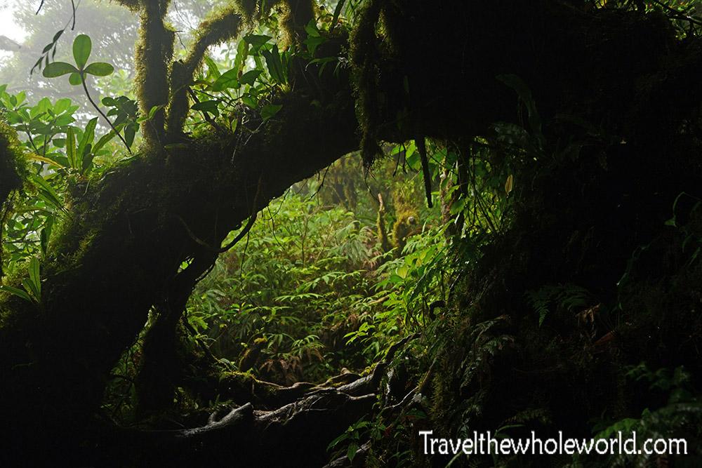 Nicaragua Ometepe Cloud Forest Trail