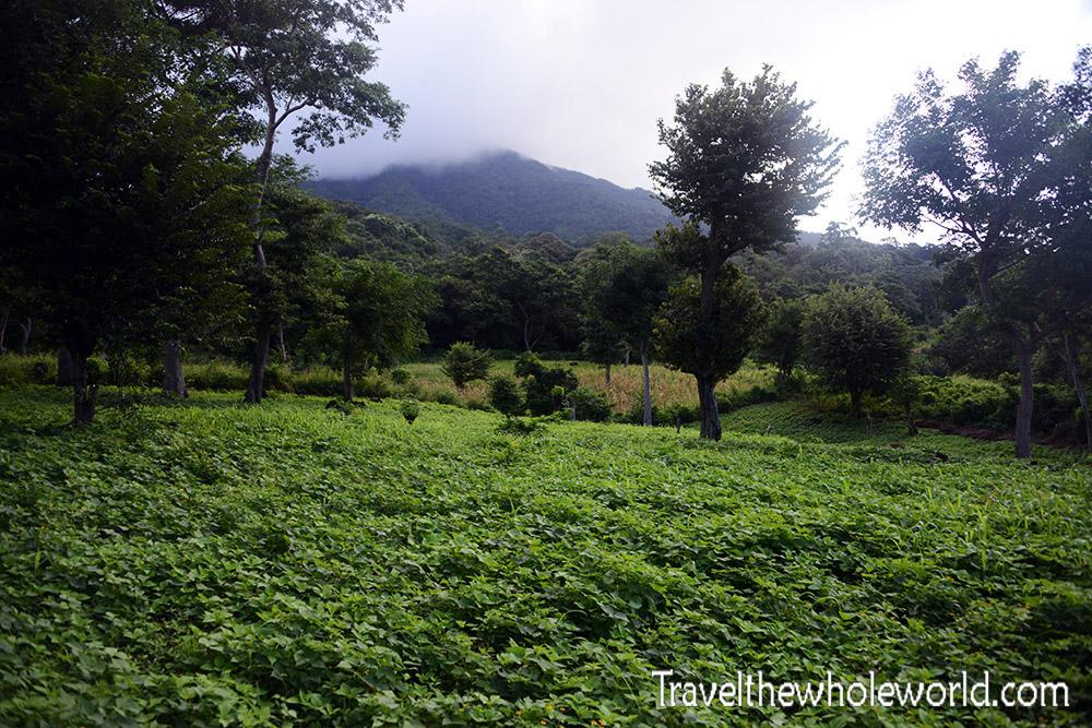 Nicaragua Ometepe Maderas Farms