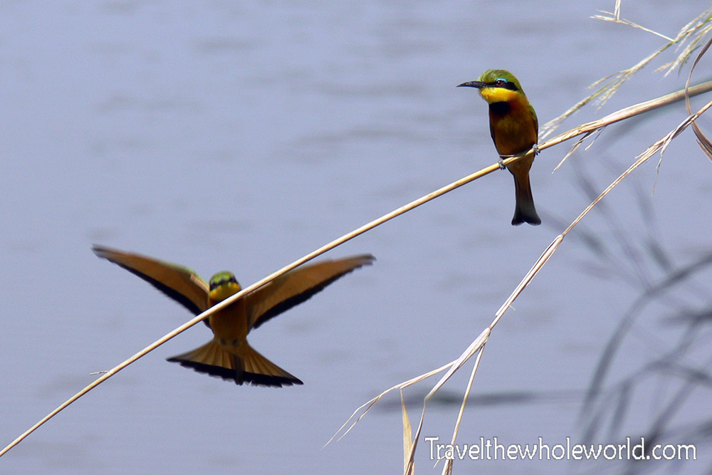Sudan Africa Bee Eaters Colorful Birds