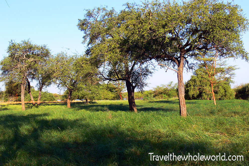 Sudan Dinder Grass