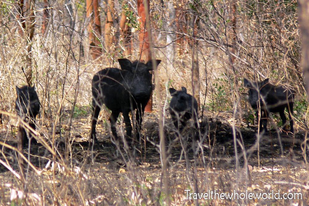 Sudan Dinder Warthog