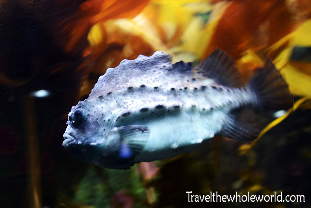 Norway Tromso Polaria Aquarium Fish