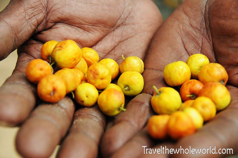 Somalia Wild Berries