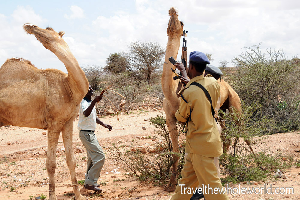 Somalia Battle of the Camels