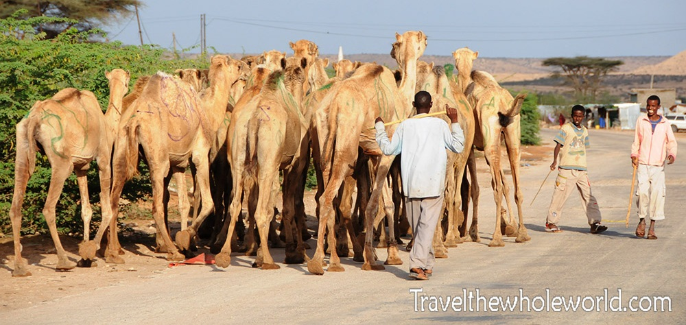 Somalia Hargeisa Camels March