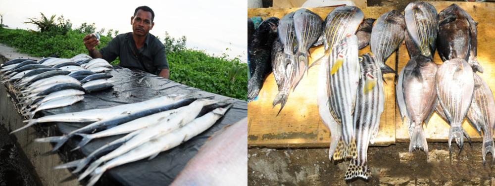 East Timor Leste Fish Market