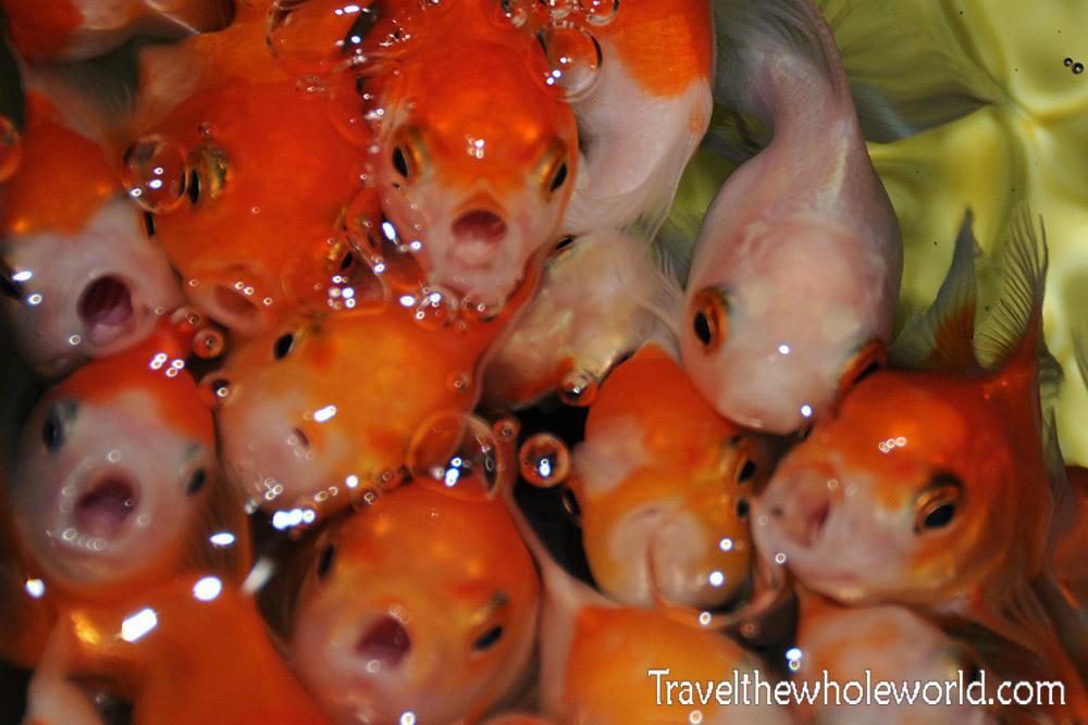 Fish Store Timor Leste