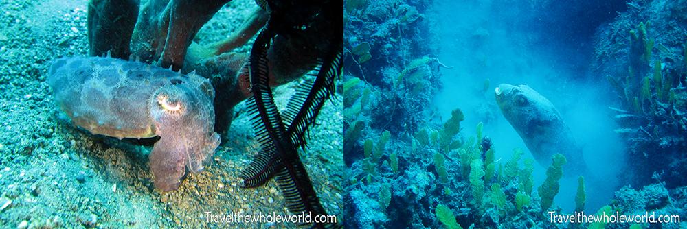 Timor Diving