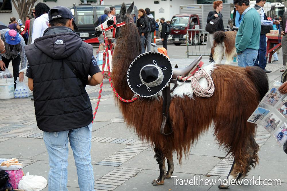 Bogota Llama