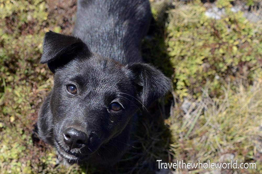 Serbia Puppy