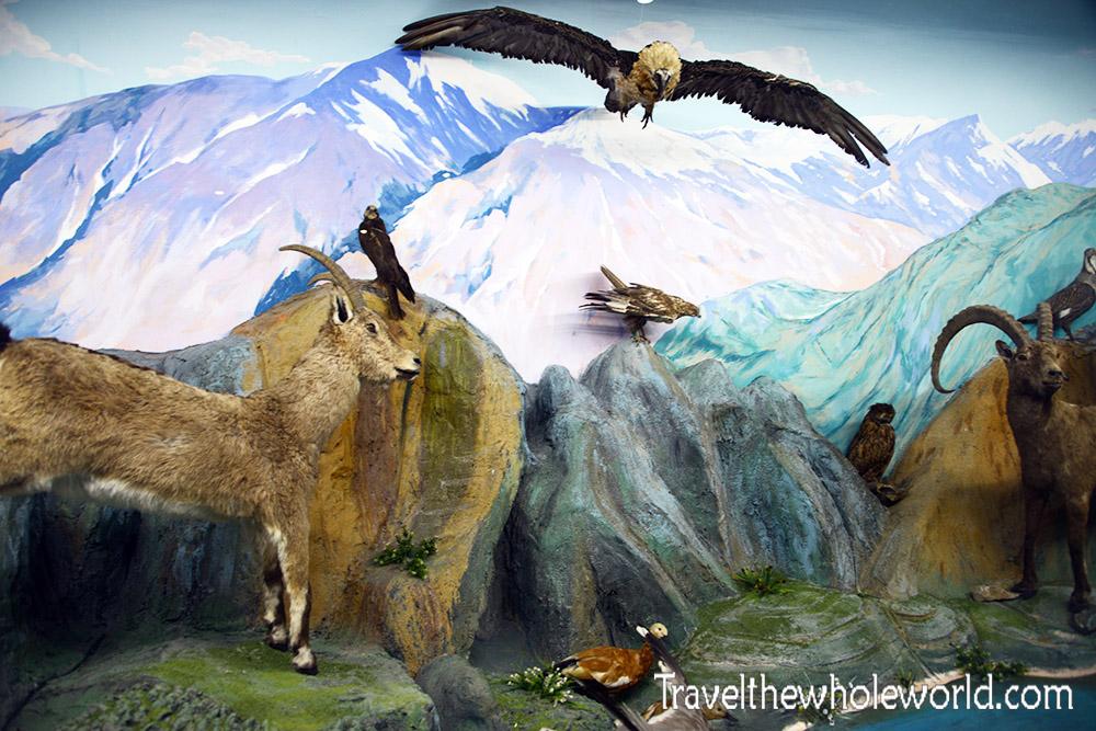 Tajikistan Dushanbe Museum Wildlife