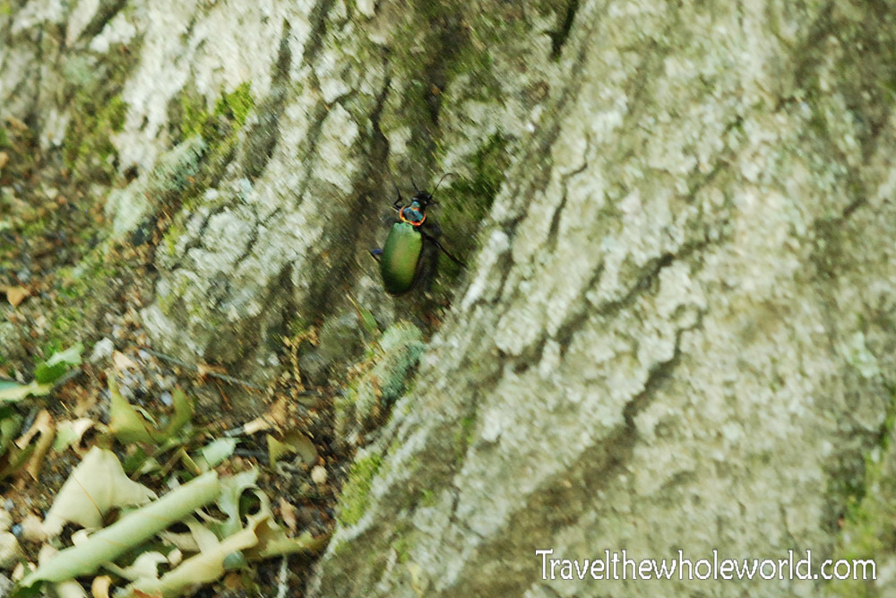 Shenandoah Caterpillar Hunter