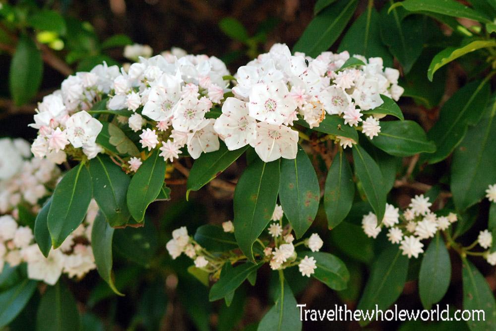 Virginia Shenandoah Moth
