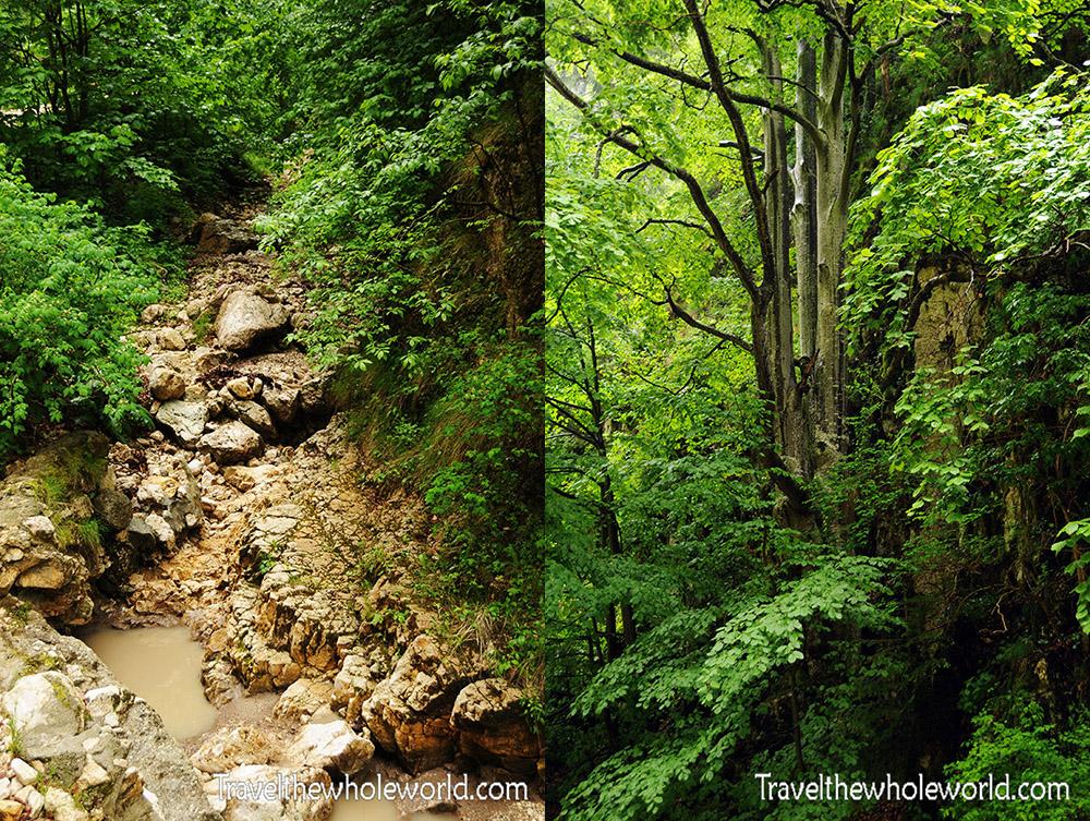 Romania Piatra Craiului Creek and Trees