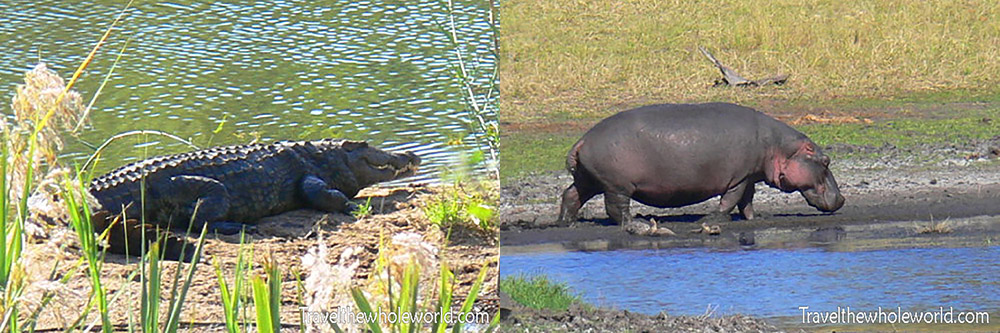South Africa Hippo & Crocodile
