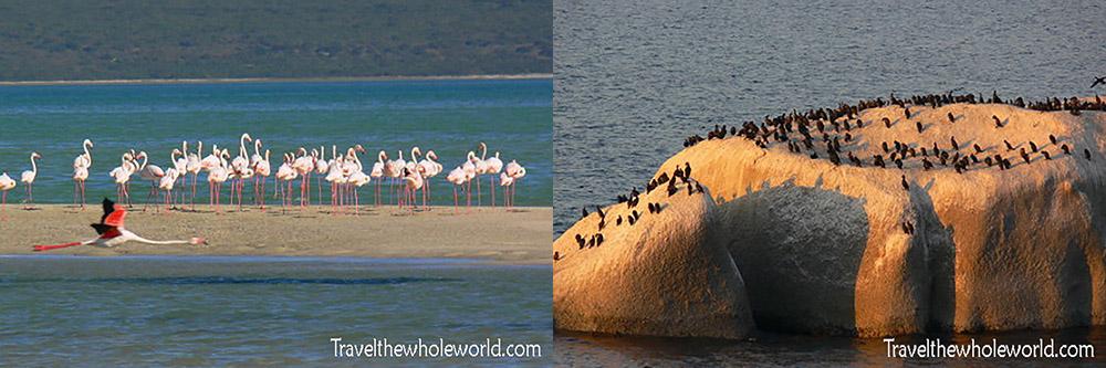South Africa West Coast National Park Flamingos Cormorants