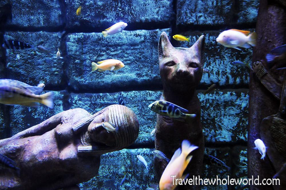 Antalaya Aquarium Egyptian