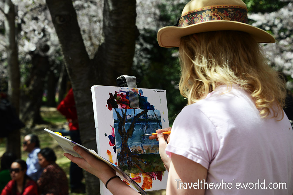 Washington DC Cherry Blossom Painter