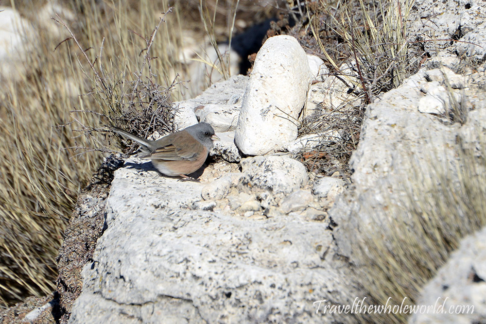 Guadaloupe Peak Bird