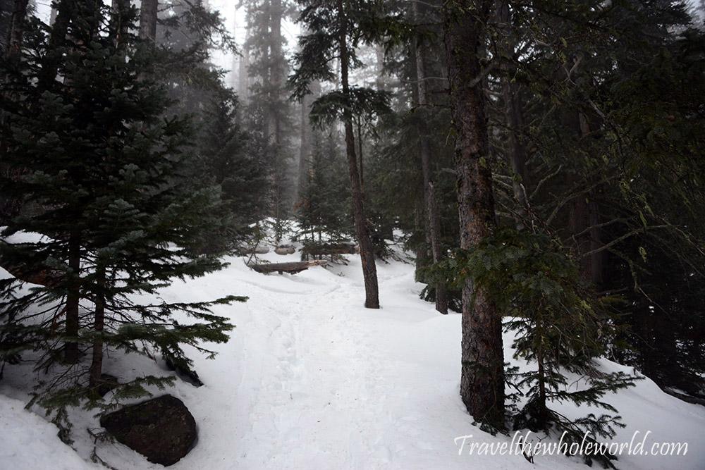 Mt. Humphreys Peak Forest Winter