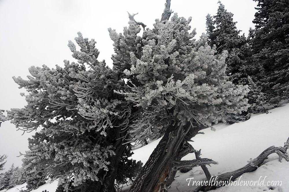 Mt Humphreys Peak Rime Ice