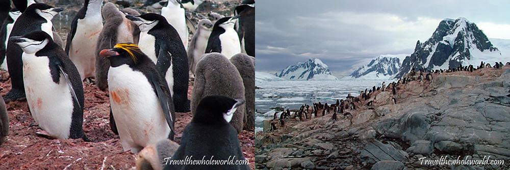 Antarctica Penguin Colonies