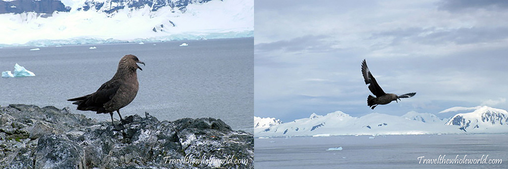 Antarctica Squa