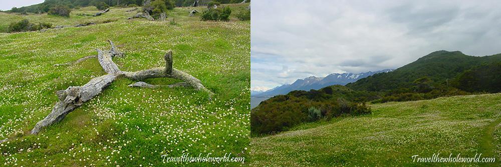 Tierra del Fuego Field